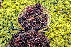 Grapes and basket Stock Image