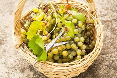 Grapes basket. Royalty Free Stock Photo