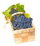 Grapes in basket Royalty Free Stock Image