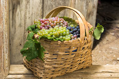 Grapes in a basket Royalty Free Stock Image
