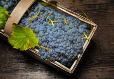 Grapes in basket Royalty Free Stock Images