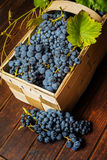 Grapes in basket Stock Photo