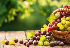 Grapes in a Basket on a Wooden Background Royalty Free Stock Photography