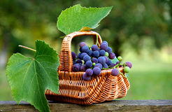 Grapes in a basket. On a wooden board stock photo