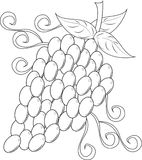 Grapes. A big group of grapes stock illustration