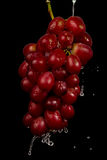 Grapes in Black Background Royalty Free Stock Photography