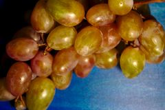 Grapes on a blue background royalty free stock photos