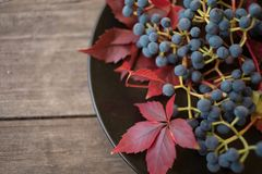 Grapes blue berries red leaves close-up macro texture wood background. Grapes blue berries red leaves close-up macro texture abstract light bokeh background royalty free stock photo