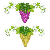 Grapes border with leaves on white background Royalty Free Stock Photos