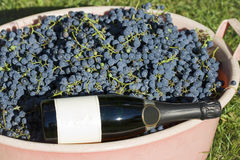 Grapes and bottle of champagne. Ready to start vine production Royalty Free Stock Photography