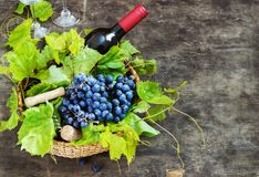 Grapes,a bottle of wine, corks and corkscrew on a wooden old table, rustic style Stock Photography
