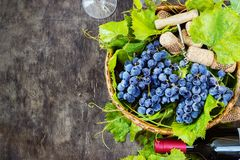 Grapes,a bottle of wine, corks and corkscrew on a wooden old table, rustic style Royalty Free Stock Photography