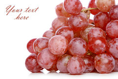 Grapes branch Royalty Free Stock Photo
