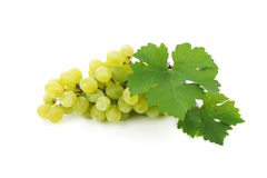 Grapes branch with leaves  Stock Images