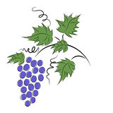 Grapes. Branch grapes on a white background royalty free illustration