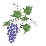 Grapes. Royalty Free Stock Photos