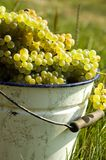 Grapes with bucket Stock Images
