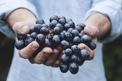 Grapes, Bunch, Fruit, Person Royalty Free Stock Images