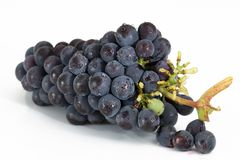 Grapes, Bunch, Fruit, Viticulture Stock Image