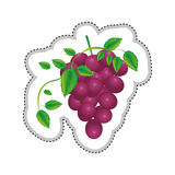 Grapes bunch icon image. Vector illustration design Stock Images