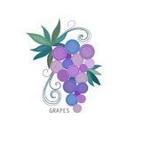 Grapes bunch with with leaves Stock Image