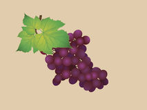 Grapes. Bunch of pink grapes with green leaf Royalty Free Stock Images