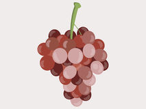 Grapes. Bunches of grapes. Vector illustration. Grapes. Bunches of grapes. Isolated object. Vector illustration Royalty Free Stock Photography