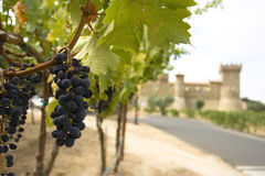 Grapes with castle Royalty Free Stock Photography