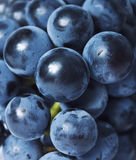 Grapes close up. Fresh Grapes close up background Royalty Free Stock Photo