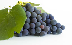 Grapes close-up Royalty Free Stock Image