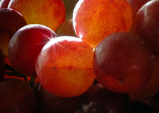 Grapes close up back lit Royalty Free Stock Photo
