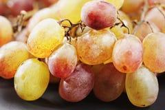 Grapes closeup Stock Image