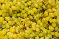 Grapes closeup Royalty Free Stock Photos