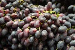Grapes closeup Stock Images