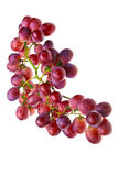 Grapes cluster Royalty Free Stock Photo