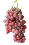Grapes cluster Royalty Free Stock Images