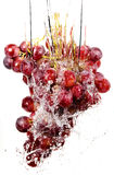 Grapes cluster in water splashes Stock Images