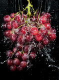 Grapes cluster in water splashes. Still-life royalty free stock photo
