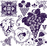 Grapes Collection Royalty Free Stock Photos