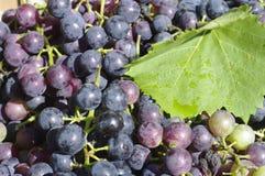 Grapes Royalty Free Stock Photos