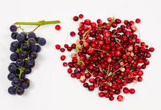 Grapes and cranberry Royalty Free Stock Photos