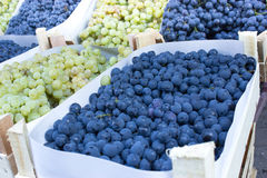 Grapes in crates Royalty Free Stock Photography