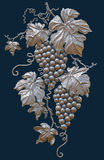 Grapes on a dark background isolated Stock Images