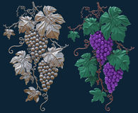 Grapes on a dark background isolated Royalty Free Stock Images