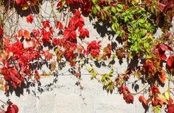 Grapes decorative autumn Stock Photo
