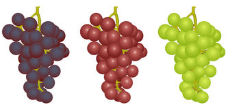 Grapes of different grades Stock Photo