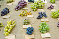 Grapes different kinds. Different kinds of grapes lying on table Stock Image