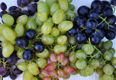 Grapes of different varieties Royalty Free Stock Image