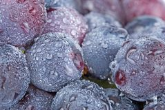 Grapes with drops, fresh fruit. Stock Photos