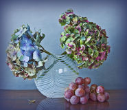 Grapes and dry Hydrangea flowerss Royalty Free Stock Image